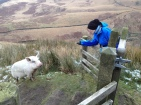 Bleaklow Head Pig